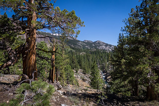 West Walker River panorama | by docrpm