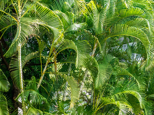 Jard n de las palmas jard n bot nico de medell n en - Jardin botanico las palmas ...