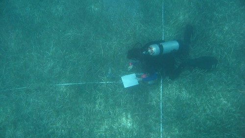 Dividing transects | by FWC Research