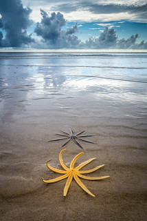 Starfish | by eddit