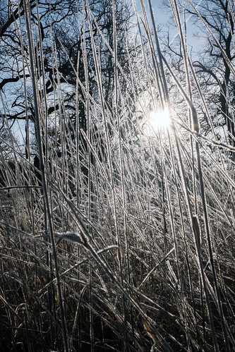 winter light | temple newsam | by John FotoHouse
