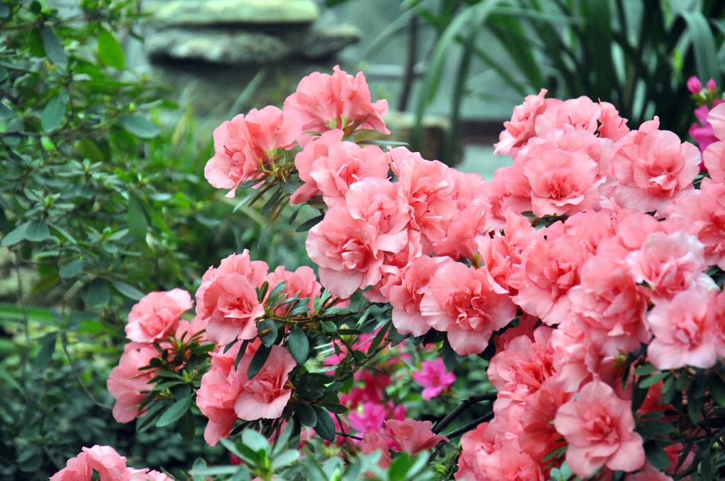 Ботанический сад DSC_0239