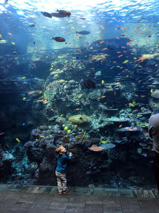 101615_aquarium11