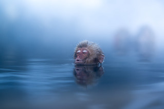 Snow Monkey Enjoys a Warm Soak in Hot Spring, Jigokudani, Japan | by torode
