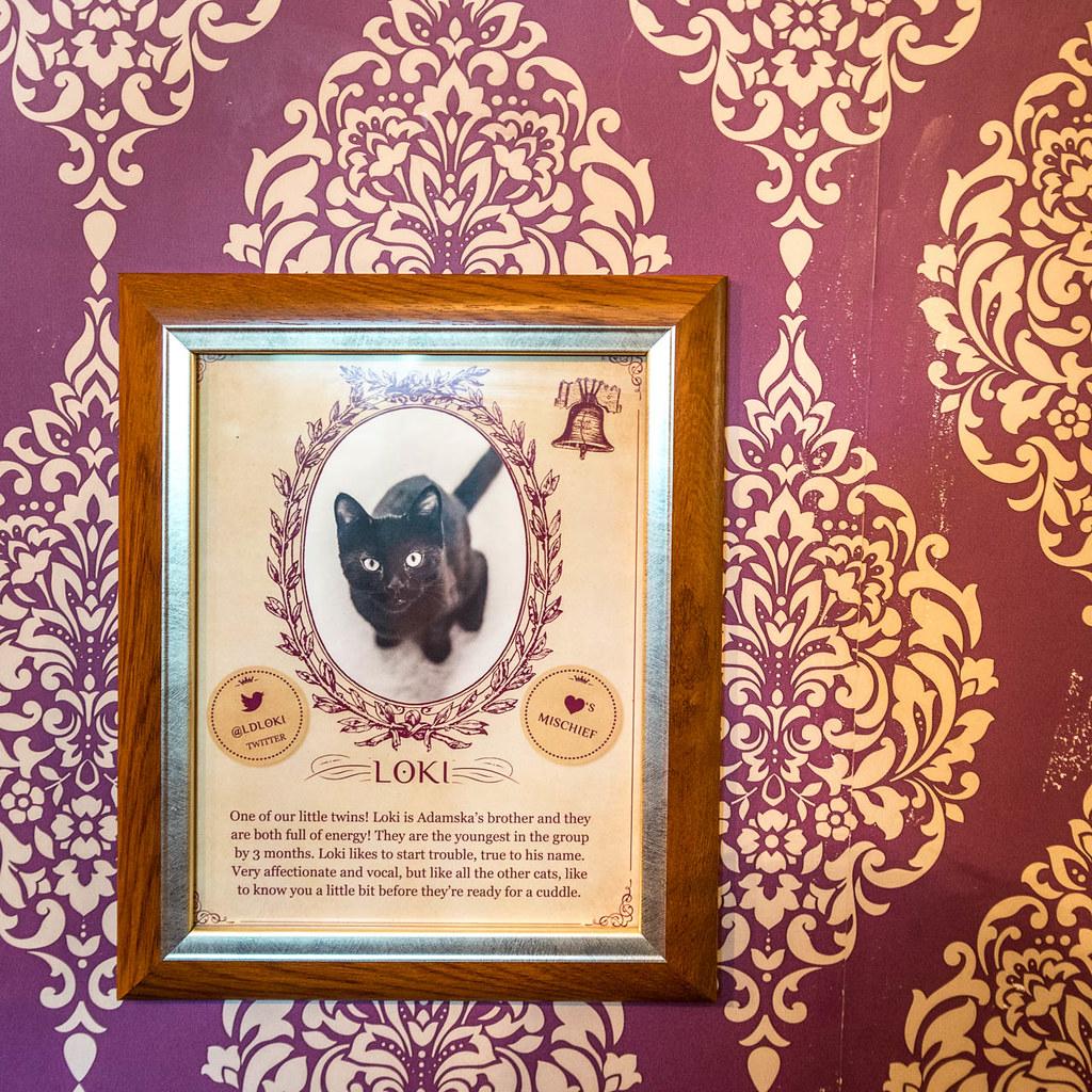 Loki - Lady Dinah's Cat Emporium | Toby Hawkes | Flickr