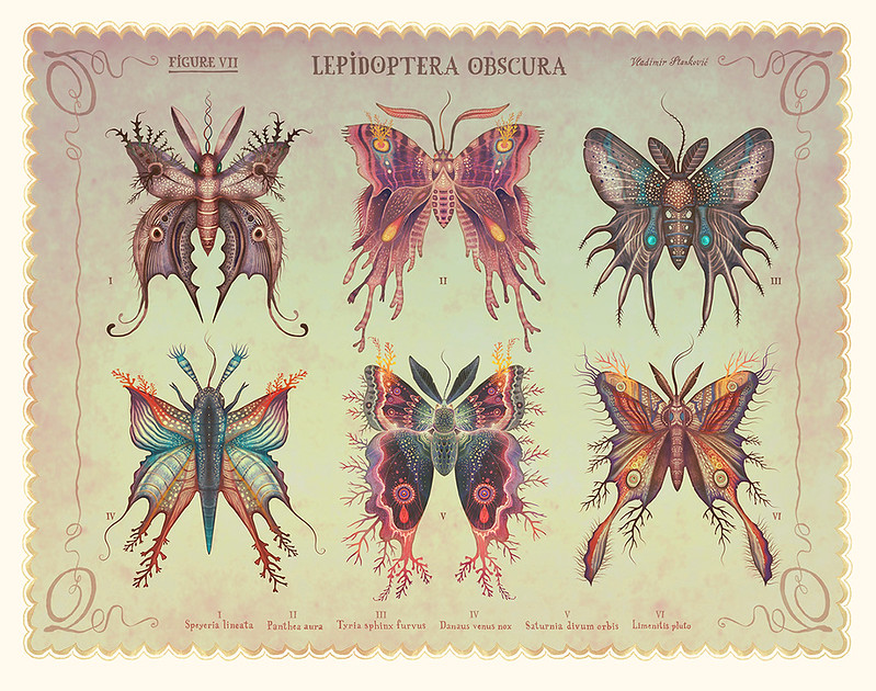 Lepidoptera obscura