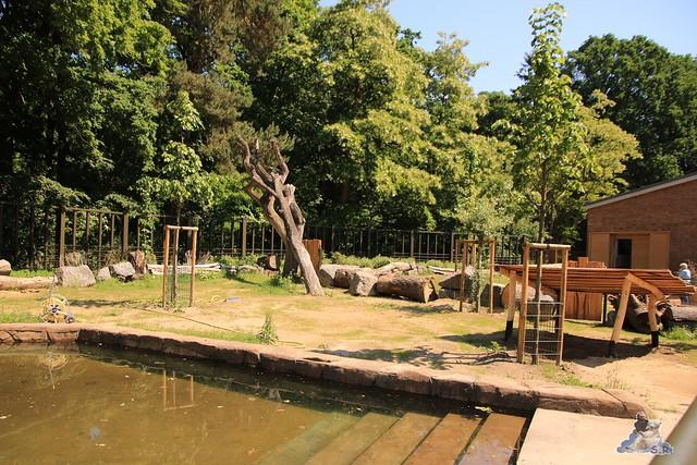 Eisbär Fiete im Zoo Rostock 04.06.2016   050