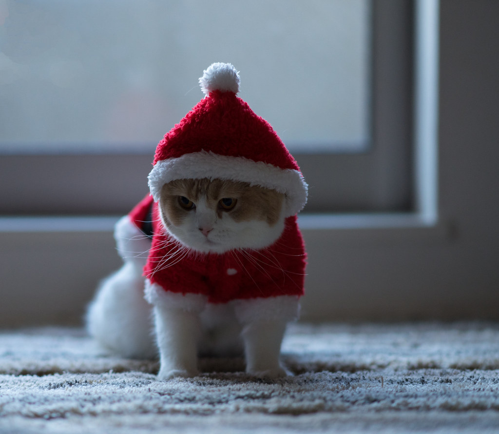 Lonely Christmas | Here is a cute video of hannah: youtu.be/… | Flickr