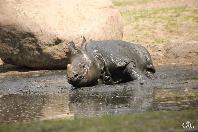 Tierpark Friedrichsfelde 29.05.201663