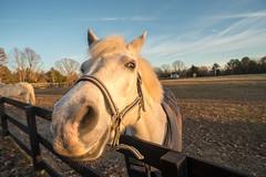Nosy horse