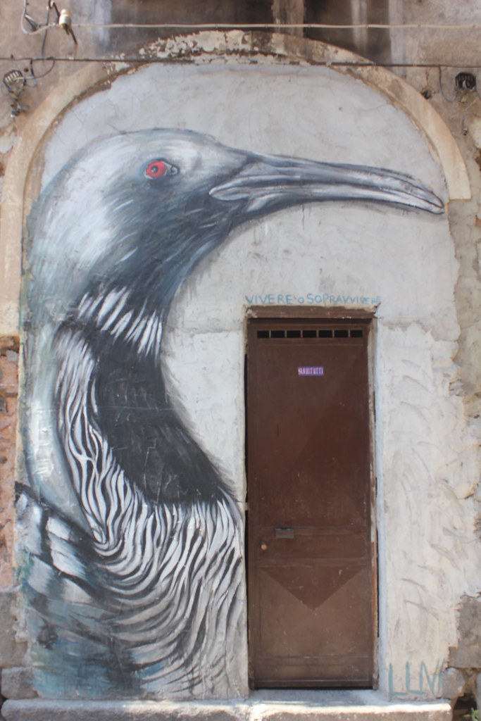 Street art Catania San Berillo district bird
