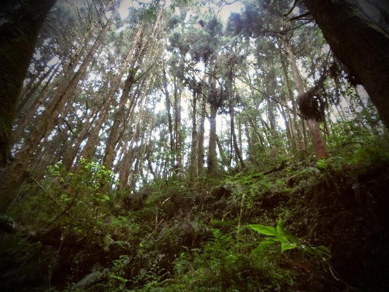 Taiwan Island trips。Couchsurfing。環島景點。南投秘境。忘憂森林。17度C隨拍。  (30)