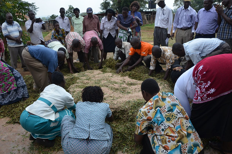 Farmers training on smallholder dairy production in Kenya