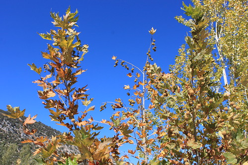 20131010_7041-blue-sky-autumn-tints | by abelpc_5355