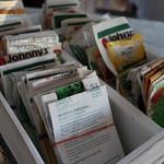 sorting seeds IMG_1303