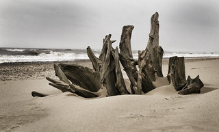 Driftwood or Modern Art? | by Neil W2011