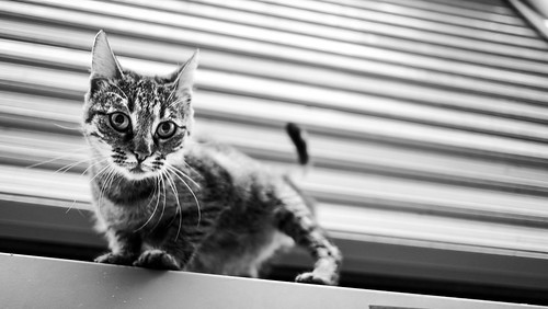 cat! :) | by ㋡ Aziz