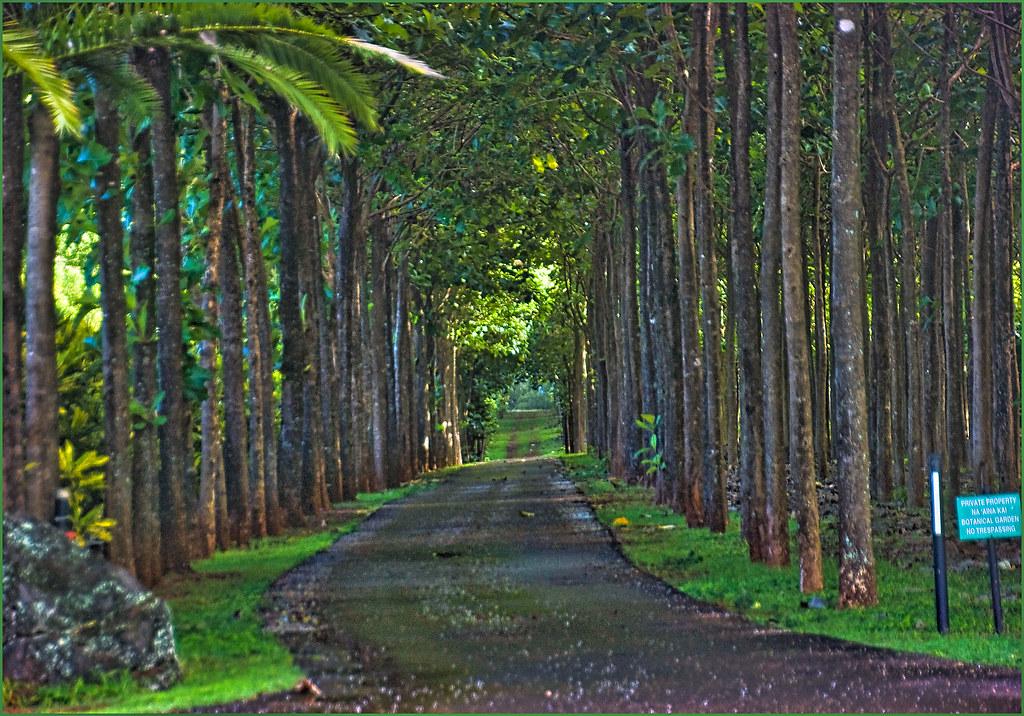 Delicieux ... Tree Tunnel Road    Na Aina Kai Botanical Garden Kilauea, Kauau0027i (