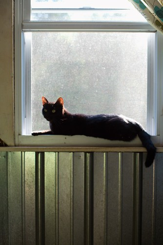 Luna on the windowsill | by Jeff Buchbinder