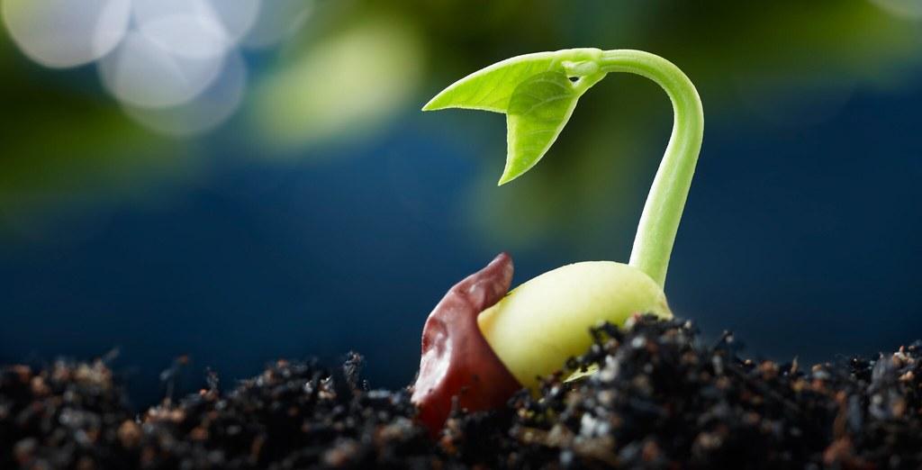 Image result for seedling