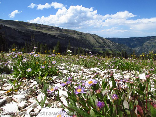 Upper Darby Canyon meadows, west side of the Tetons in the Jedediah Smith Wilderness, Wyoming