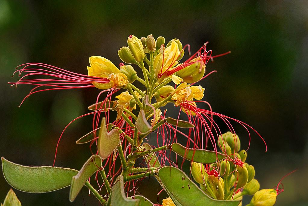 Fleurs jaunes au pistil rouge
