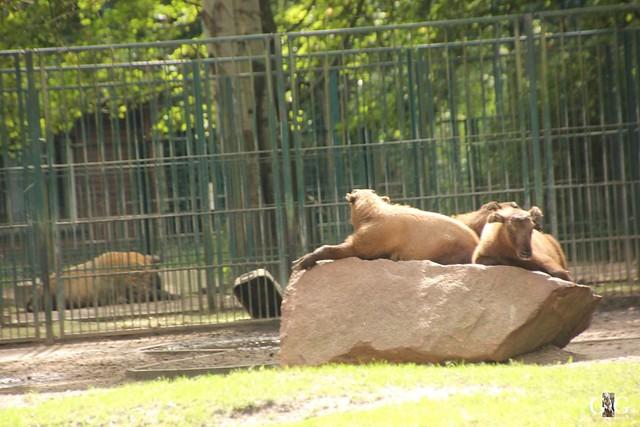 Besuch Tierpark Friedrichsfelde 07.08.1681