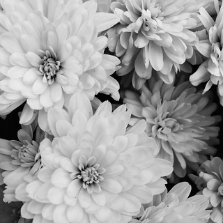 Mums (black and white) | by THEMACGIRL*