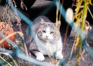 Today's Cat@2014-12-14 | by masatsu