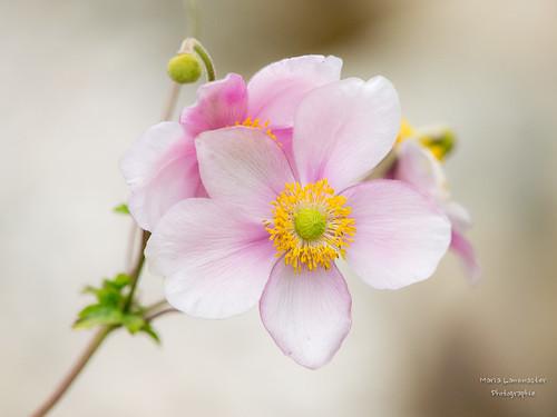 Herbstliche Blüten