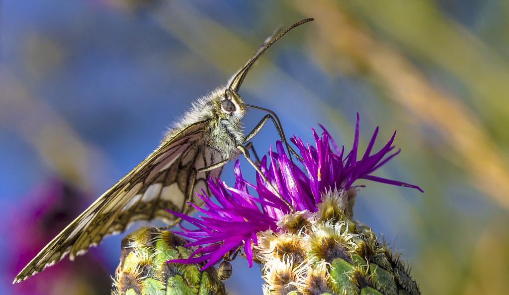 Drinking nectar