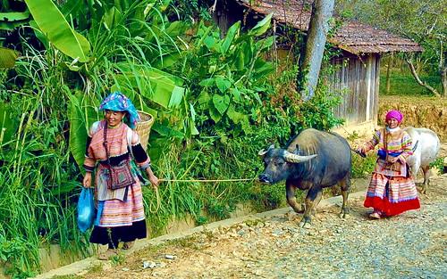 Vietnam-near Sapa-Hmong people