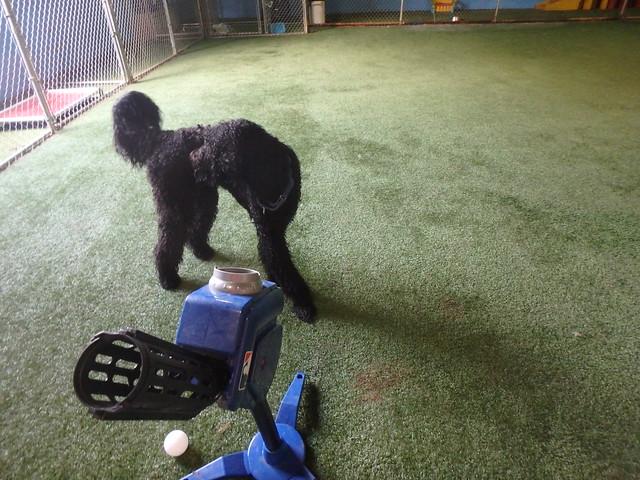 05/27/16 Baseball Fetch :D!