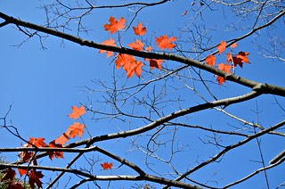 last fall leaves | by David McSpadden