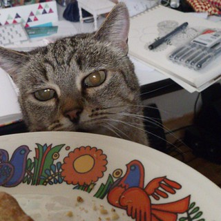 Cat Wont Eat Regular Food Anymore Only Canned