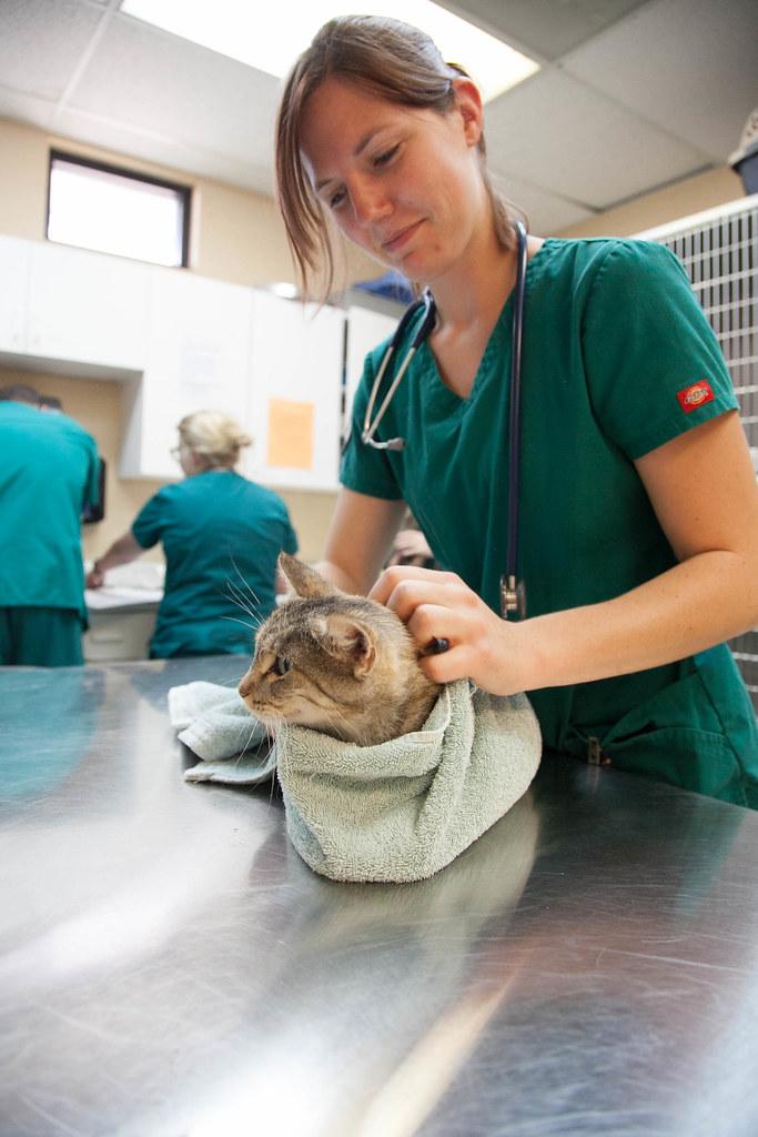Austin Community College Vet Tech Program Veterinary Tech Flickr