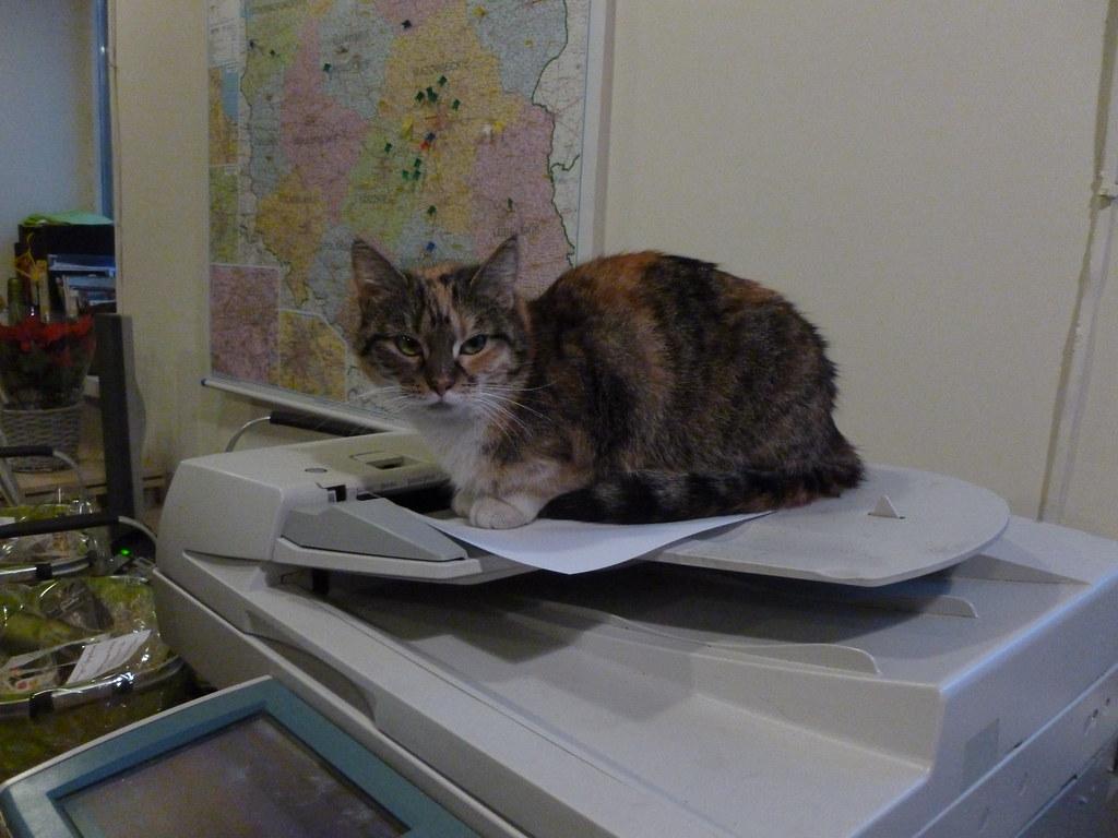The Office Cat Warszawa Monika Flickr