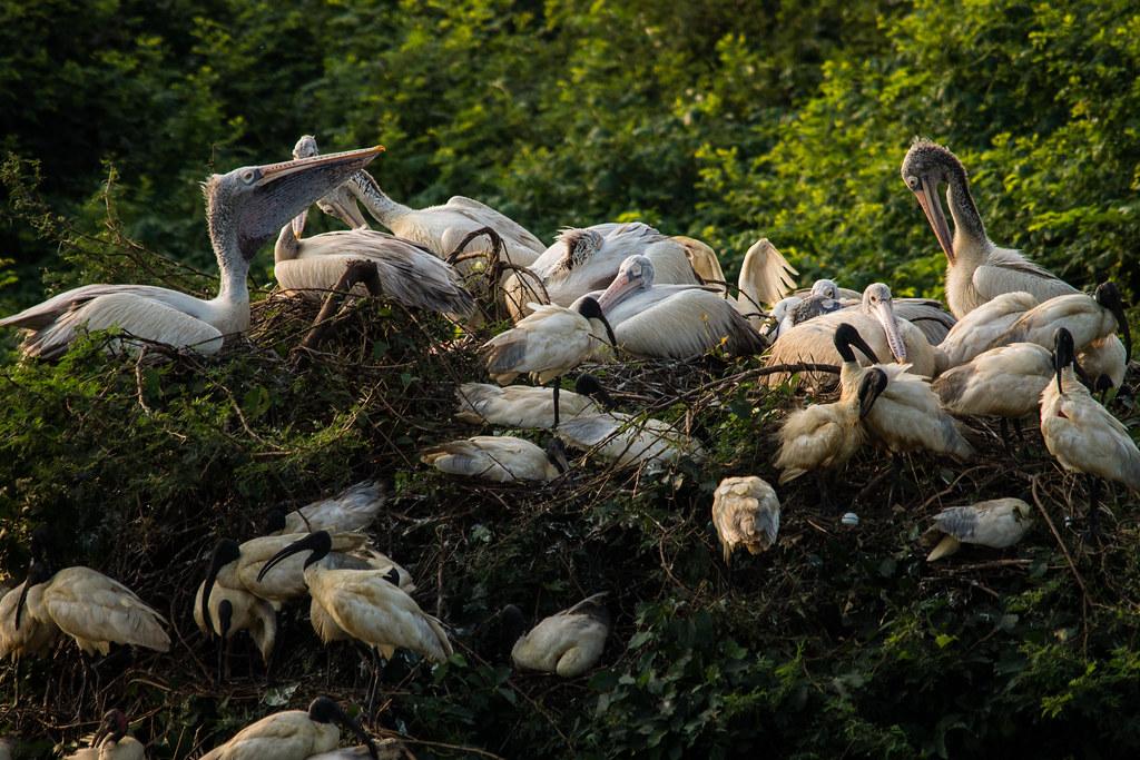 Image result for Nelapattu Bird Sanctuary images