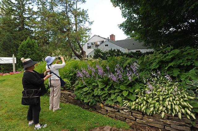 Hosta border at the Kelley-Kelley nursery