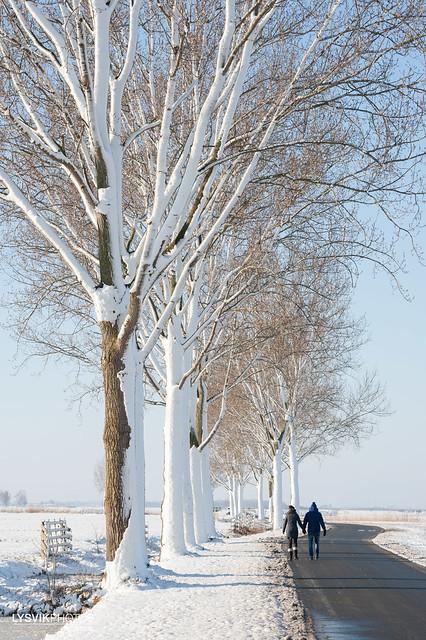 Stel wandelt in besneeuwd polderlandschap