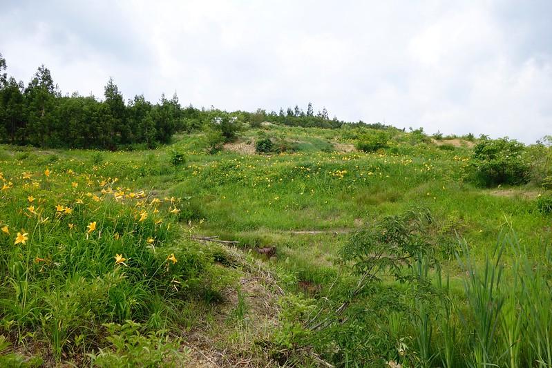 HAKUSAN Alpine plant Open Garden
