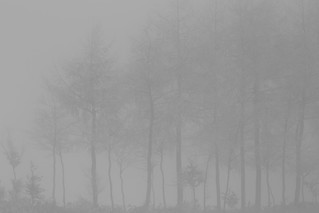 Some trees in mist | by Alexandre Dulaunoy
