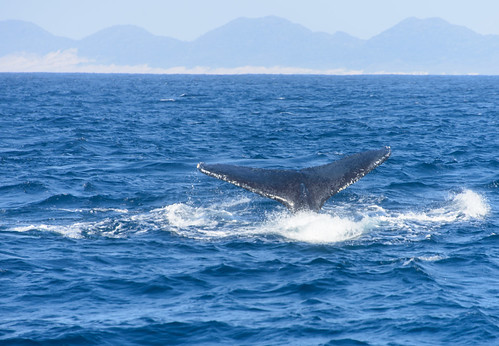 St. Lucia, South Africa - Whales watching | by GlobeTrotter 2000