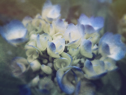Blue Hydrangea done in Stackables 'Faded Bloom' formula