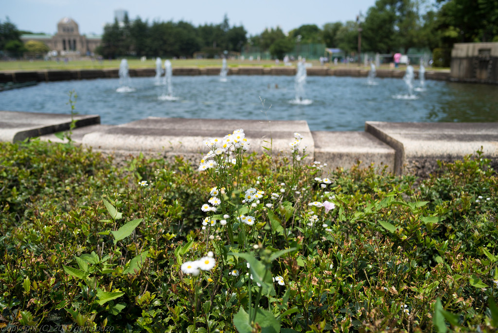 wild flowers around fountain