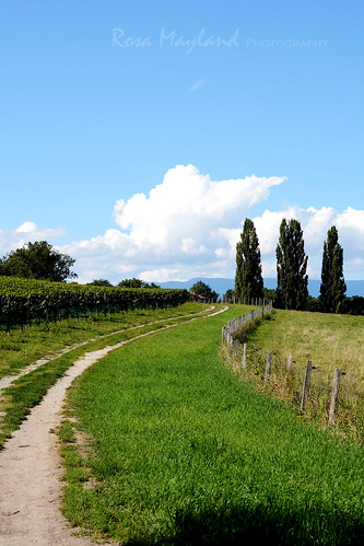 Summer - Geneva Countryside | by Rosa's Yummy Yums