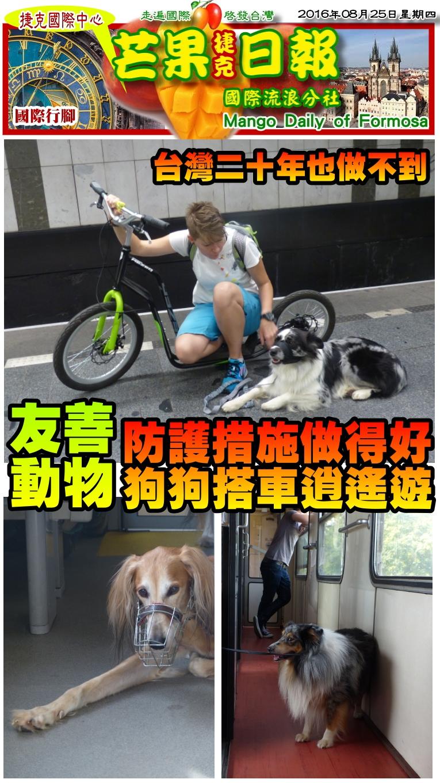 160825芒果日報--國際旅遊--幅護措施做得好,狗狗搭車逍遙遊