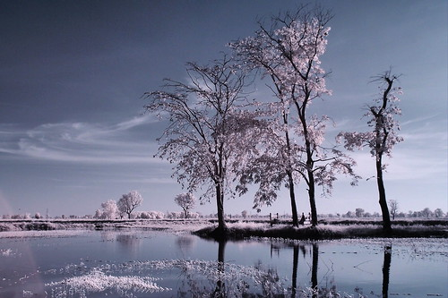 11 Tree lake front processed EPM1 | by Matt Jones (Krasang)