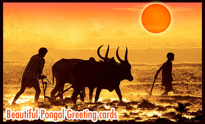 25 beautiful pongal greeting cards and design ideas in tam flickr 25 beautiful pongal greeting cards and design ideas in tamil by creative neel m4hsunfo