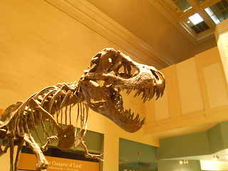 T-Rex in NMNH, Washington | by Pavel Polukhin